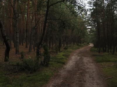 Mazowieckie łąki i pola